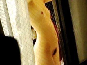 【盗撮】一人暮らしにも慣れてきて部屋では全裸で過ごすことも多くなってきた女子を覗き撮り♪